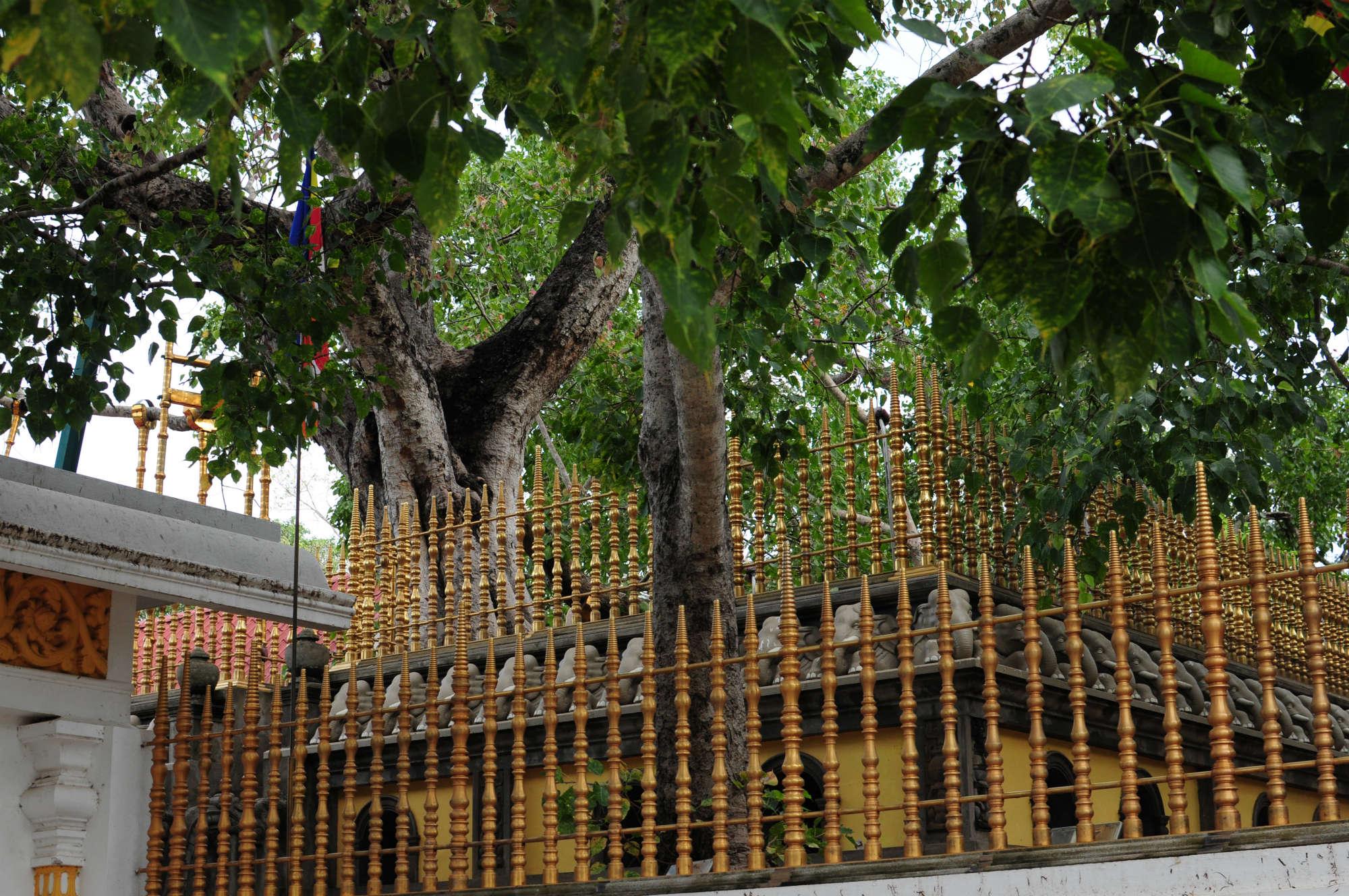 聖地アヌラーダプラ/Anuradhapura