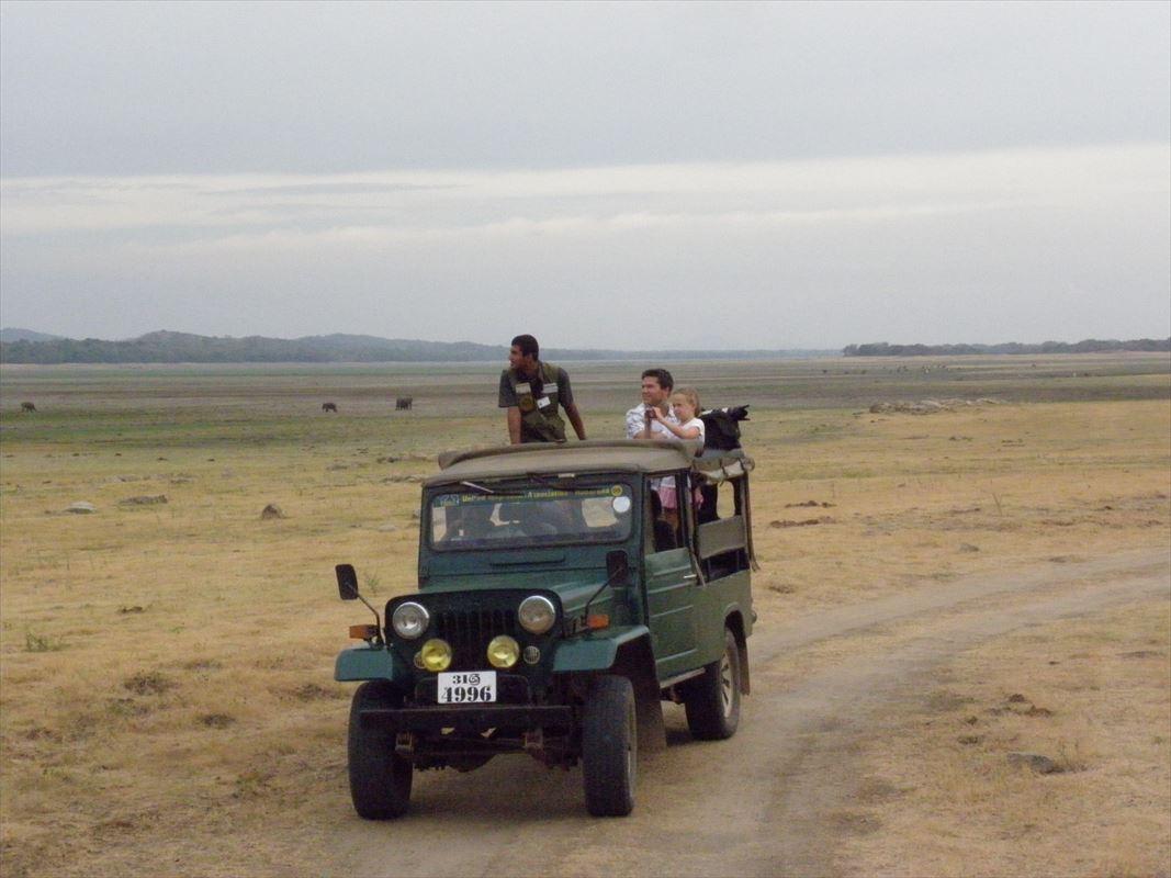 シーギリアからも至近のミンネリア国立公園でサファリ[MINNERIYA]