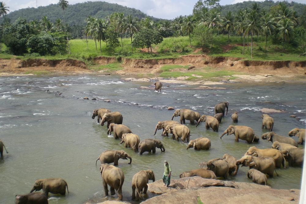 悠々と過ごす象を間近で見ることが出来る ピンナワラ象の孤児院