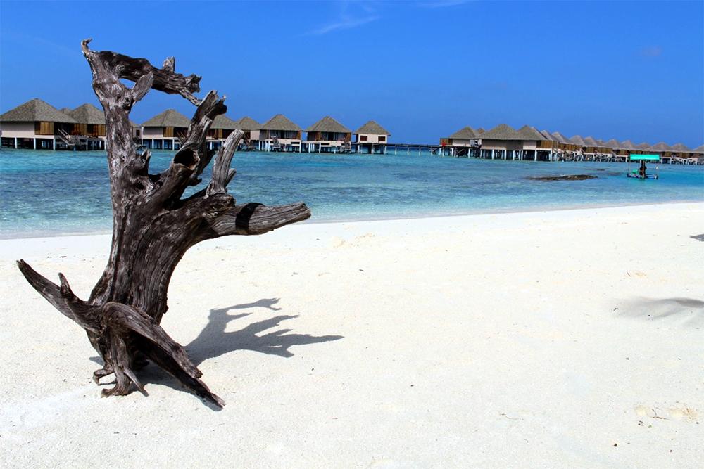 南マーレ環礁 アダーラン・プレステージ ヴァドゥ(Adaaran Prestige Vadoo)