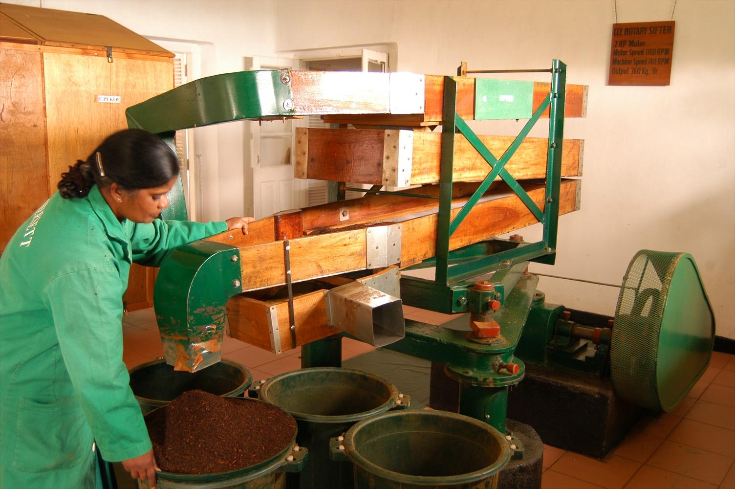 tea-factory1